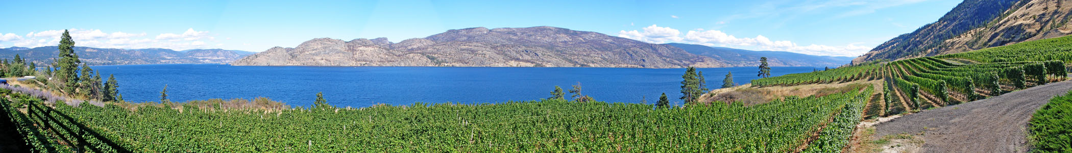 Okanagan_banner_Greata_Vineyard_view